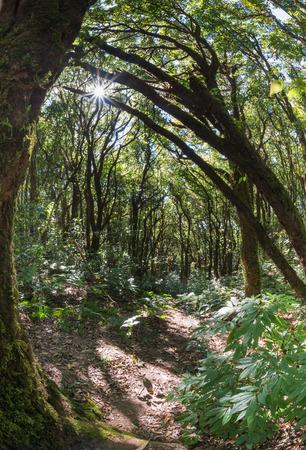fish eye lens: Montane forest in Doi Inthanon, take by fish eye lens