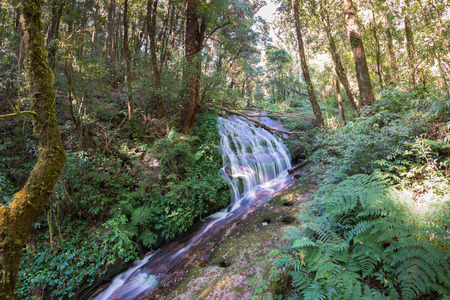 montane: small waterfall in montane forest, Doi Inthanon National park