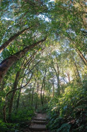 montane: Upper Montane Forest on Doi Inthanon National park Stock Photo