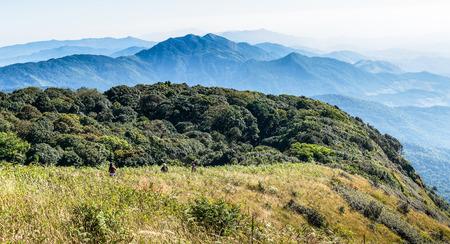 montane: Montane forest at Kew Mae Pan Nature trail, Doi Inthanon