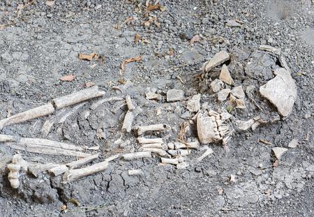 muerte: Antigua hueso del pie humano en el suelo Foto de archivo