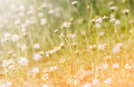 Grass Weeds Naturally Lizenzfreie Fotos, Bilder Und Stock Fotografie ...