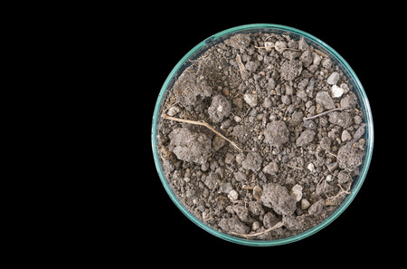 educaton: macro of dry soil on petri dish, concept science research or science educaton, copy space
