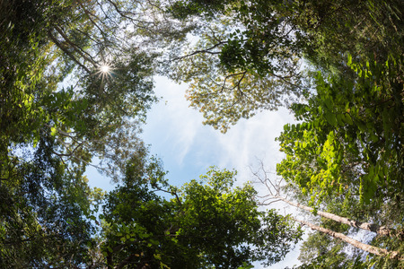 fish eye lens: canopy tree of Mixed Deciduous Forest in Thailand, take picture from fish eye lens.