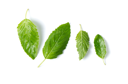 Holy basil leaf isolated on white background,It is cultivated for religious and medicinal purposes, and for its essential oil. It is widely known across the Indian subcontinent as a medicinal plant and a herbal tea. Stock Photo