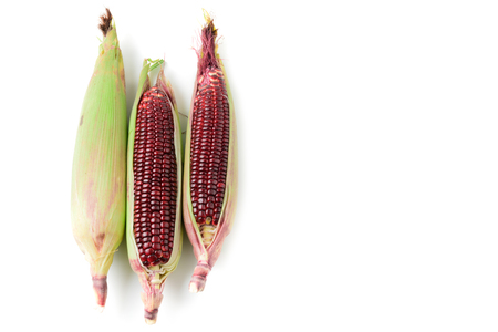 Siam Ruby Queen Corn isolated on white background with copy space, Can be eaten fresh. The taste is sweet and crisp.