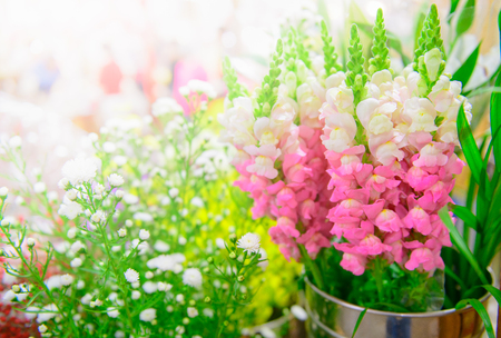 pink Snapdragon flower in stainless pot and other flower in morning market..