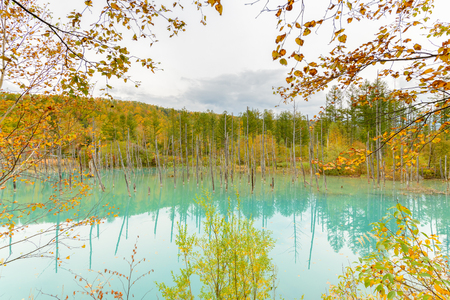 Blue pond (Aoiike) in Biei, Hokkaido Autumn season, It is the result of works on the Biei River, carried out after the 1988 eruption of Mount Tokachi..
