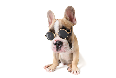 Cute french bulldog wear sun glass isolated on white Banco de Imagens