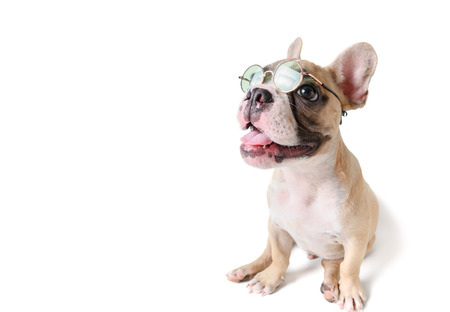 Cute french bulldog wear sunglass and smile isolated on white Banco de Imagens