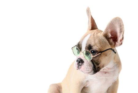 Cute french bulldog wear sun-glass isolated on white