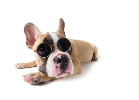 Cute french bulldog wear sunglass isolated on white