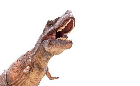 Tyrannosaurus rex isolated in white Stock Photo