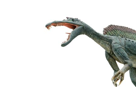 Dangerous Spinosaurus isolated on white 免版税图像