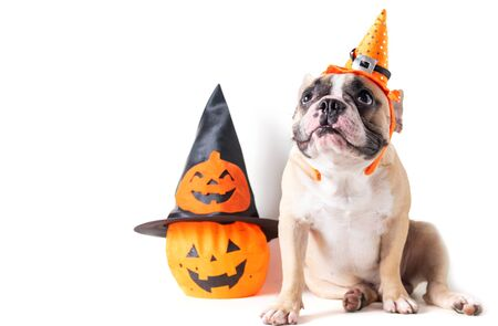 Portrait of French bulldog with hat halloween and smile isolated on white