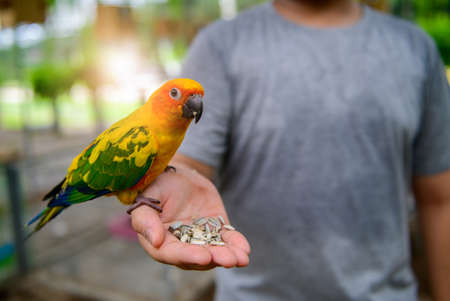 A lovebird is eating dry sunflower seeds in a boy's hand.