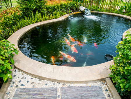 koi fish in koi pond in the garden Stock Photo