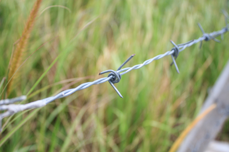 barbed wire fence: Barbed wire fence and green field closeup Stock Photo
