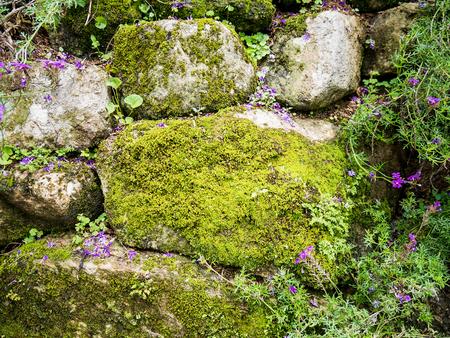 Vecchio muro di pietra con muschio verde e fiori Archivio Fotografico