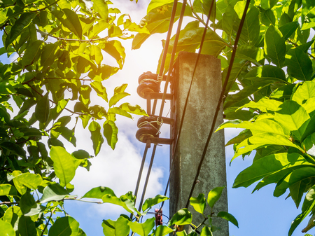 powerline: Powerline with green leaves and blue sky Stock Photo