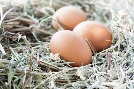 fresh eggs in nest background