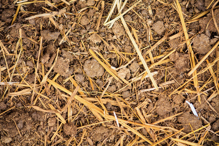 droppings: dry cow manure texture background