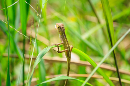 forest lizard close up in nature Stock Photo