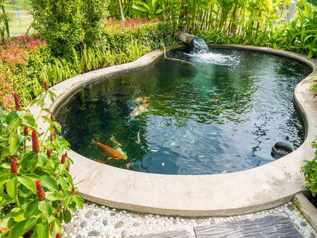 Phantasie Karpfen Koi-Karpfen in Koi-Teich im Garten Standard-Bild - 63854043