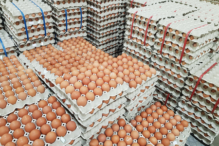 fresh raw chicken eggs in package for sale in supermarket Stock Photo
