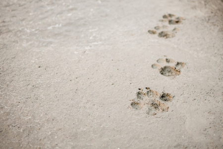 Dog footprints on cement concrete floor background
