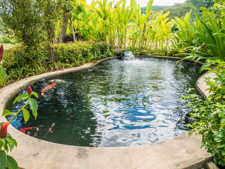 koi fish carps swimming in garden pond