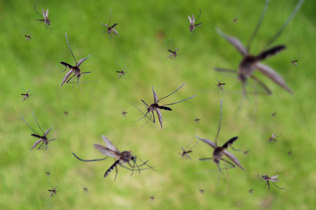 Many mosquitoes fly over green grass field 스톡 콘텐츠 - 108204272