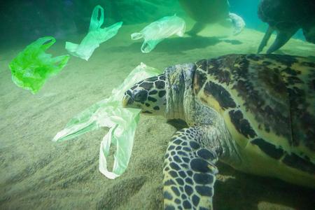 Zeeschildpad eet plastic zak oceaanvervuiling concept Stockfoto