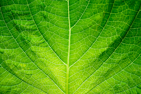 green leaf texture background closeup