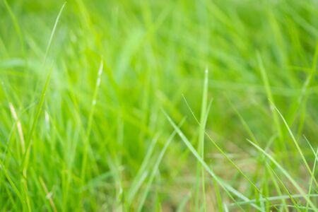 Abstract green grass close up blur background