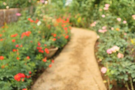 Abstract blur beautiful roses in flower garden background