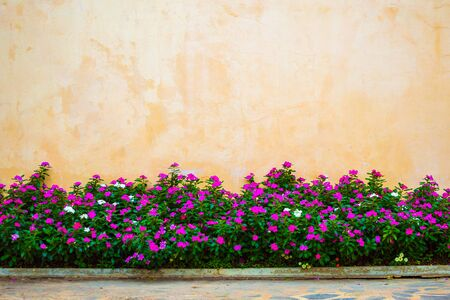 Beautiful flowers garden with concrete wall background