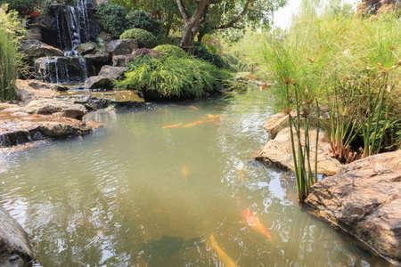 koi fish in the garden pond