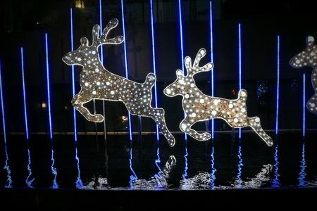 light display: Reindeers light display