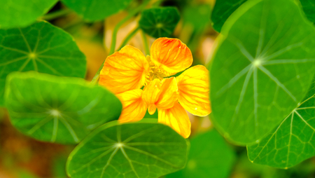 yellow  green: blooming flower