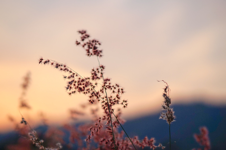 wayside: wayside with twilight