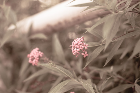 tone: nature blurred background;vintage tone