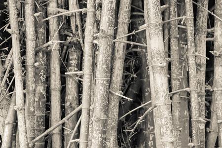 vintage background: Bamboo background (vintage tone)