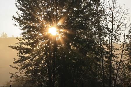 The sunrise beam through a tree in an autumn morning