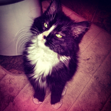 otganimalpets01: Sylvester the cat