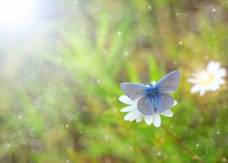 Butterfly background photo