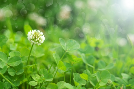 Clover background photo