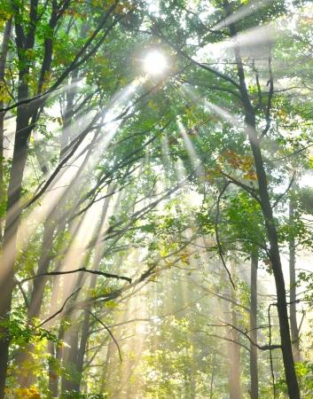 beautiful woodland: Forest at dusk