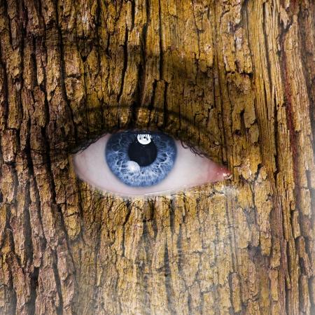 face in tree bark: Tree face