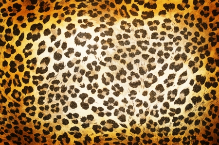 Cheetah pattern photo